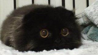 Гимо: очаровательный кот с самыми огромными глазами