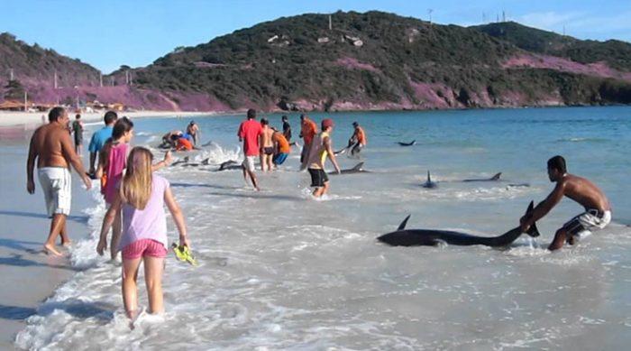 Прилив выбросил на пляж стаю дельфинов. Только посмотрите, что сделали отдыхающие! (ВИДЕО)