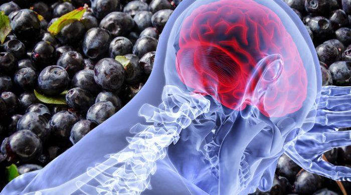 7 простых продуктов, которые помогут увеличить активность мозга