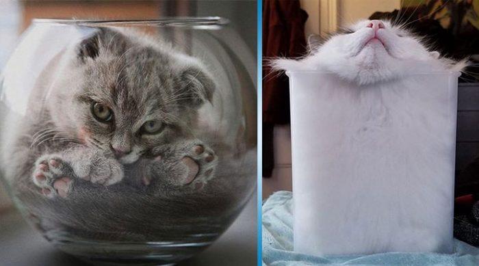 20 лучших доказательств того, что коты – это жидкость