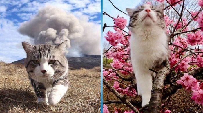 Этот полосатый кот настолько фотогеничен, что ему могут позавидовать лучшие модели мира