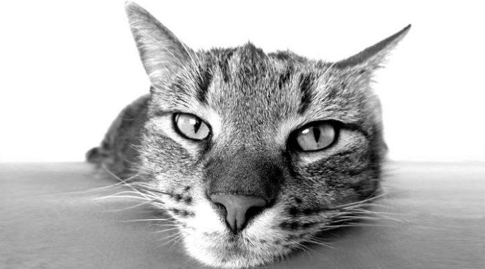 10 научных доказательств того, что коты полезны для здоровья