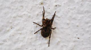 В вашем доме появились пауки? ВОТ ПОЧЕМУ не стоит убивать их, даже если очень боитесь!