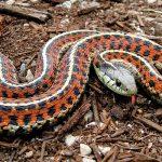 Если укусила змея: вот что можно и что нельзя делать ни в коем случае!
