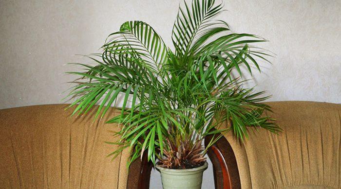 13 растений, которые очень полезно держать в доме