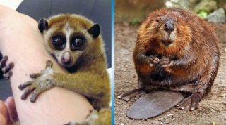 Милые, но опасные животные: 15 милашек, которые на самом деле могут вас убить