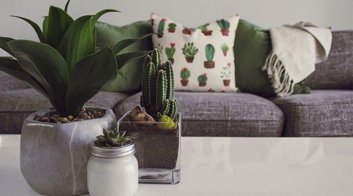 Комнатные растения: как преобразить свой дом легко, быстро и дешево