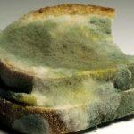 Что будет, если съесть хлеб с плесенью: то, что нам обычно не рассказывают