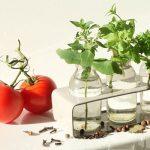 Что можно выращивать дома: 7 неожиданных и полезных растений