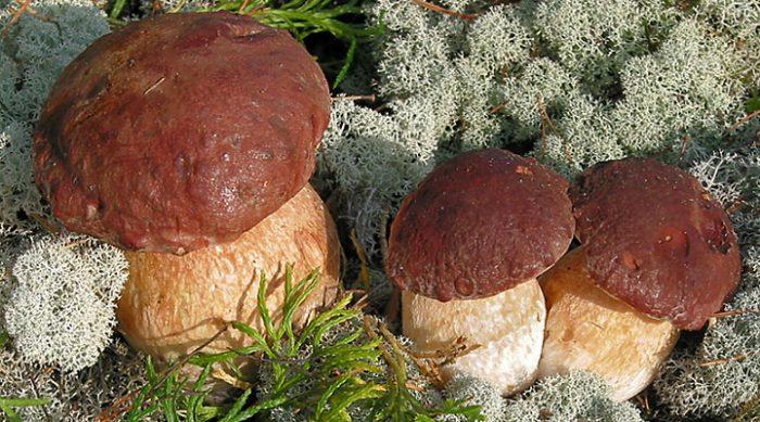 Блюда с грибами: 7 быстрых и вкусных рецептов