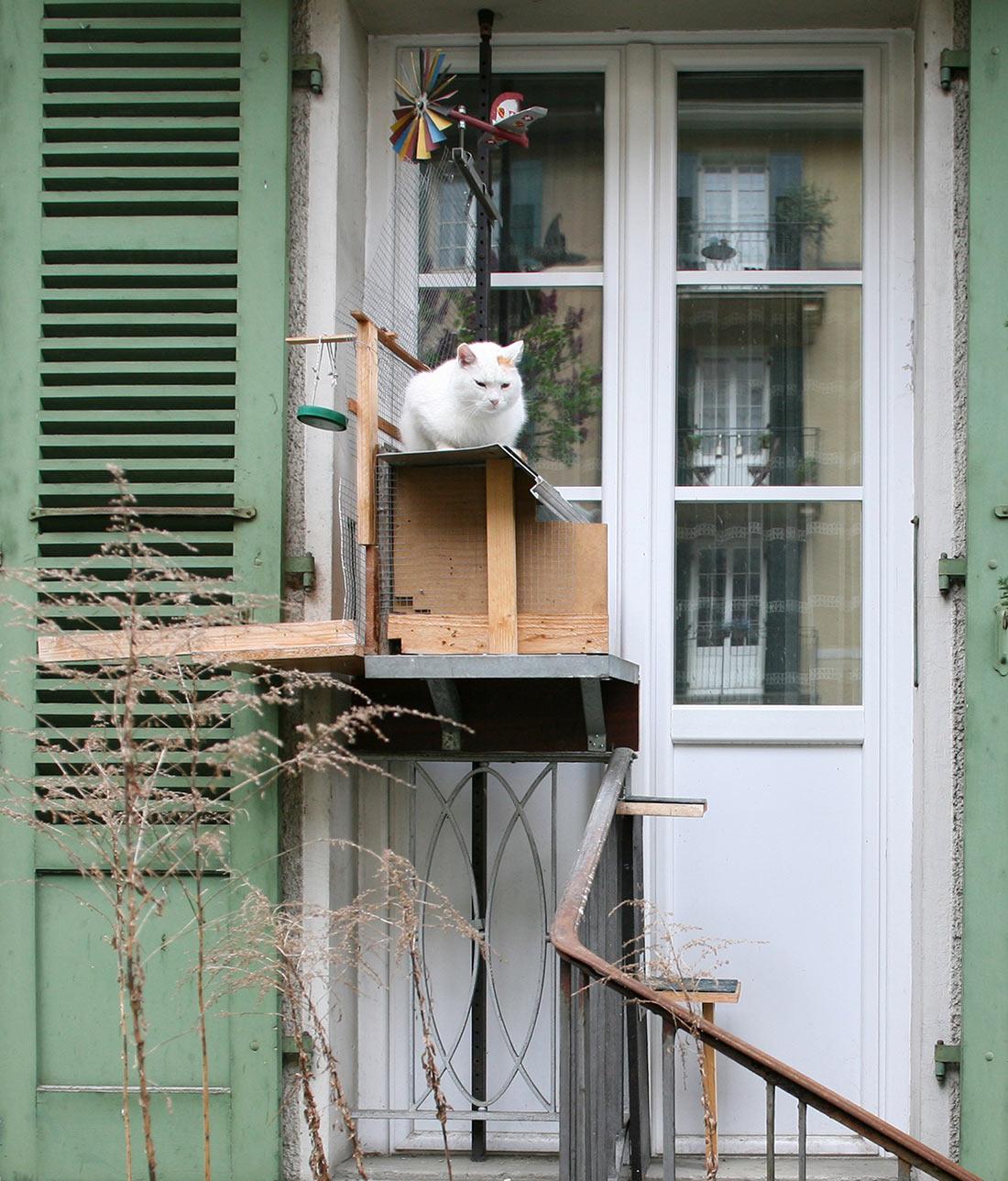 Лестницы для котов в Берне