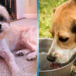 Чем кормить собаку летом и надо ли ее стричь: 5 советов, которые помогут вам не навредить питомцу в жаркий сезон