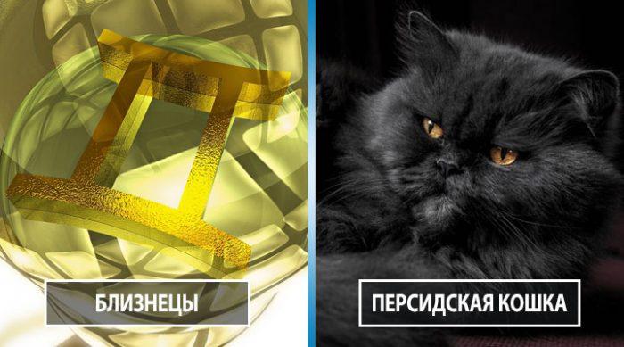 Узнайте, какая порода кошек вам больше всего подходит по знаку Зодиака
