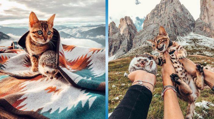 Эти закадычные друзья никогда не устают исследовать мир. Только посмотрите на этих необычных путешественников!