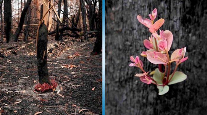 Это чудо природы вселяет надежду. Австралийские леса начали возвращаться к жизни