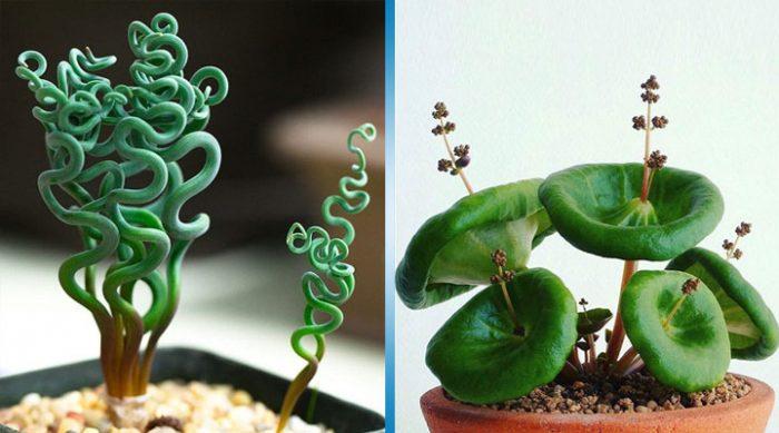 13 необычных комнатных растений, которые похожи на пришельцев