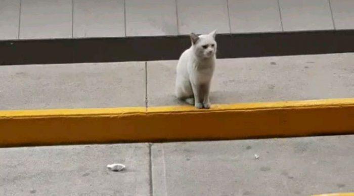 Уличный кот повел ее за собой в магазин и указал лапой на полку. Это полностью изменило их жизнь